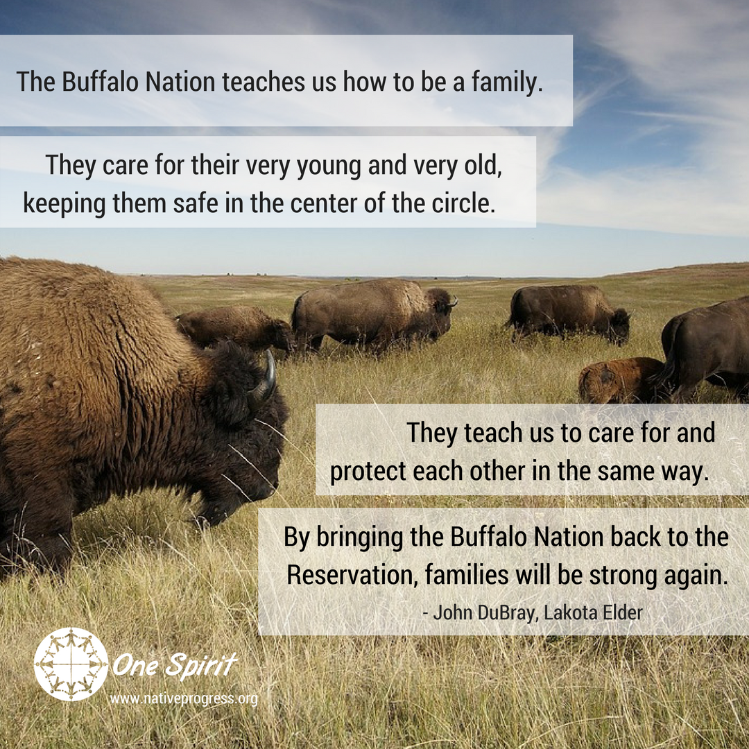 Teachings of the Buffalo Nation